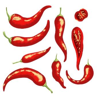 Czerwona papryczka chili. ilustracja na białym tle.