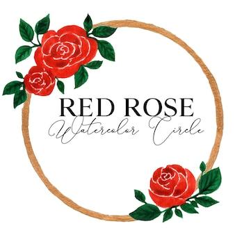 Czerwona róża kwiat akwarela koło ilustracja