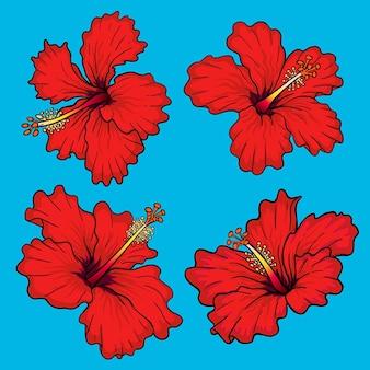 Czerwona róża pakiet kwiatów hibiskusa do kolekcji