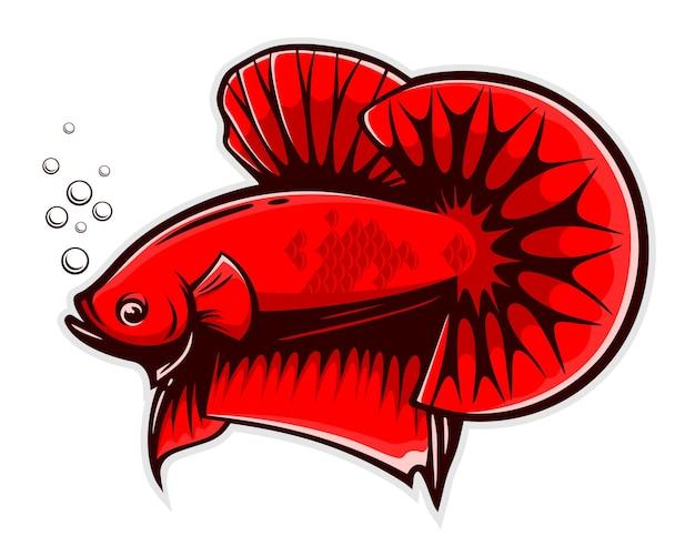 Czerwona ryba betta splendens