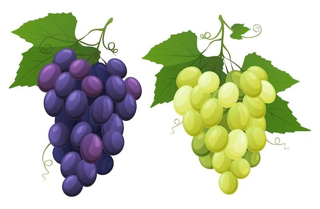Czerwone i białe winogrona stołowe świeże owoce, z których robi się wino ilustracji wektorowych