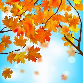 Czerwone i żółte liście na tle błękitnego nieba.