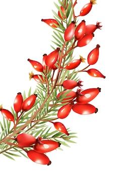 Czerwone jagody z liśćmi jodły