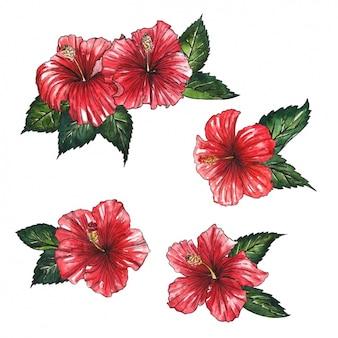 Czerwone kwiaty wzór