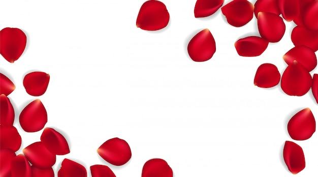 Czerwone płatki róż na białym tle. eps 10 wektor. tło czerwone płatki róż