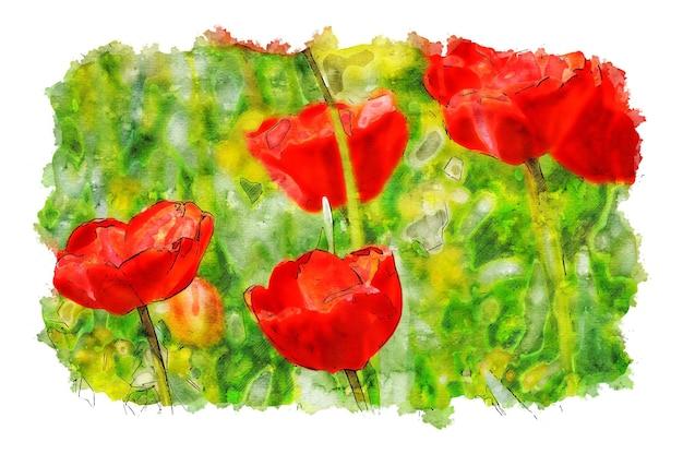 Czerwone tulipany kwiatowe akwarela
