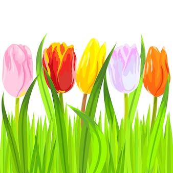 Czerwone, żółte, różowe, pomarańczowe, białe tulipany w jasnozielonej trawie na białym tle