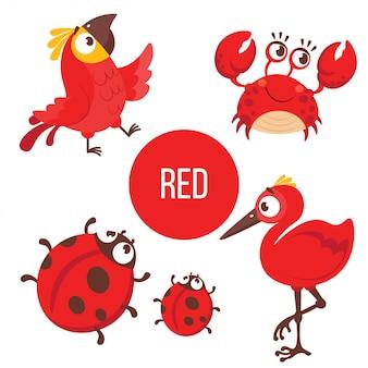 Czerwone zwierzęta: papuga, krab, biedronka, ptak.