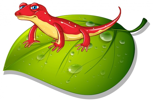 Czerwony gekon na zielonym liściu