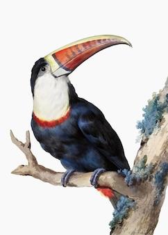 Czerwony zafakturowany wektor ilustracji z tukanem, zremiksowany z dzieł sztuki autorstwa aert schouman