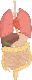 Część ciała ludzkiego - izolowane narządy