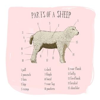 Część stylu szkicu owiec