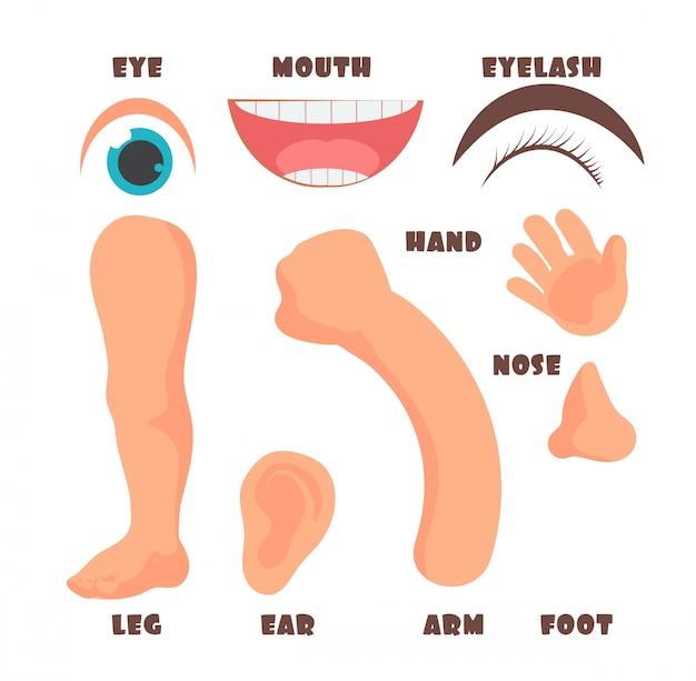 Części ciała dziecka kreskówka z zestawem angielskiego słownictwa