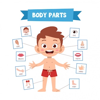 Części ciała ludzkiego