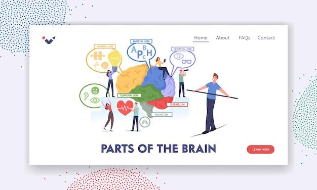 Części szablonu strony docelowej mózgu. małe postacie w ogromnym ludzkim mózgu oddzielonym na wykresie czołowym, ciemieniowym, potylicznym, skroniowym, móżdżku, pniu mózgu. ilustracja wektorowa kreskówka ludzie