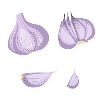 Czosnek na białym tle. ilustracja wektorowa złamanego czosnku, ząbek czosnku, cebula czosnku w stylu cartoon.