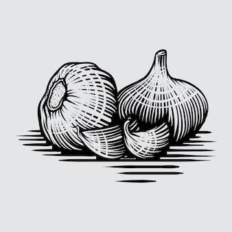 Czosnek w stylu grafiki rysowane ręcznie ilustracji