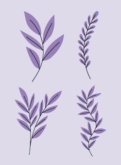 Cztery fioletowe rośliny