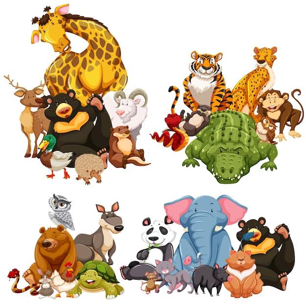 Cztery grupy dzikich zwierząt
