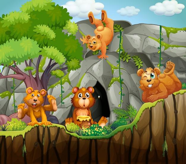 Cztery niedźwiedzie żyjące w jaskini