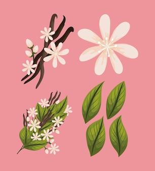 Cztery przedmioty natury