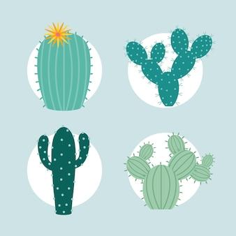 Cztery przedmioty z kaktusa