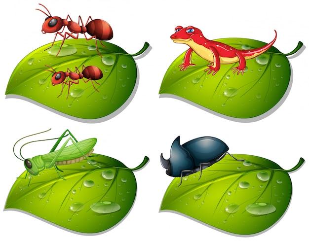 Cztery rodzaje owadów na zielonych liściach