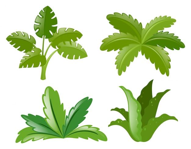 Cztery różne rodzaje roślin