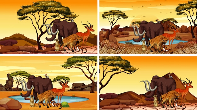 Cztery sceny z afrykańskimi zwierzętami