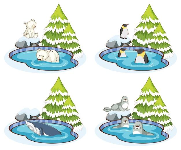 Cztery sceny z wieloma zwierzętami