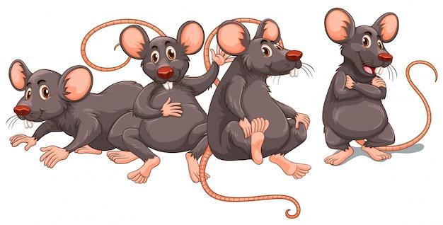 Cztery szczury z szarym futrem
