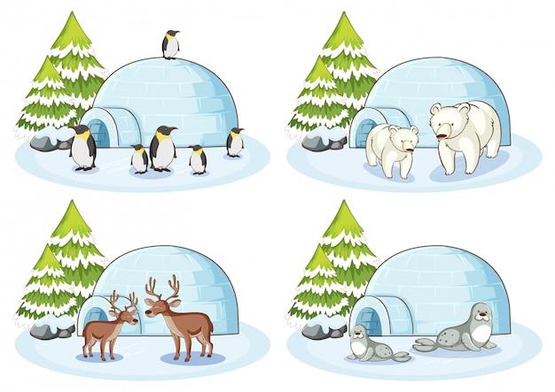 Cztery zimowe sceny z różnymi zwierzętami