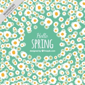 Daisy spring background