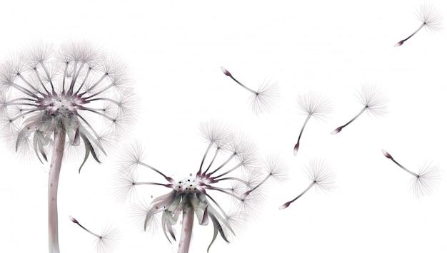 Dandelion w akwareli