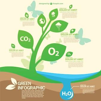 Darmowe infography zielony szablon eko