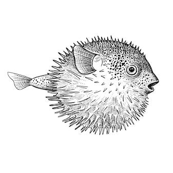 Dekoracyjna ryba koralowa jeż na białym tle