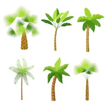 Dekoracyjne drzewa palmowego ikony zestaw izolowane ilustracji wektorowych