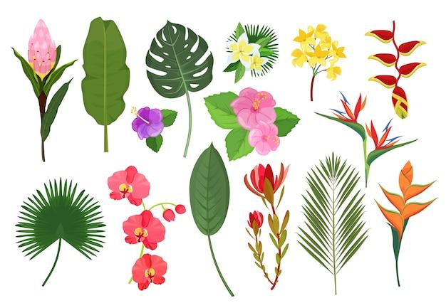 Dekoracyjne kwiaty egzotyczne. botaniczny bukiet liści tropikalnych roślin do dekoracji ilustracji wektorowych. ogród liści i kwiatów, tropikalna flora naturalna