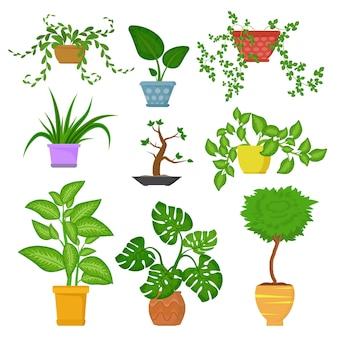 Dekoracyjne rośliny doniczkowe w doniczkach zestaw na białym tle. dekoracyjne rośliny domowe. zielona roślina do domu ilustracji