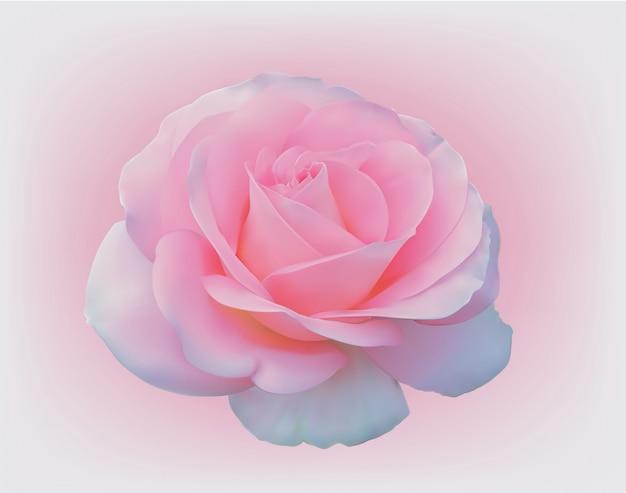 Delikatna różowa róża