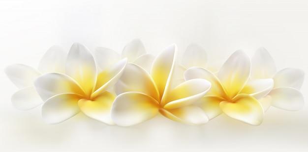 Delikatne spa plumeria lub frangipani na whiye. pozioma realistyczna ilustracja