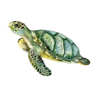 Denny zielony żółw odizolowywający. akwarela. ilustracja