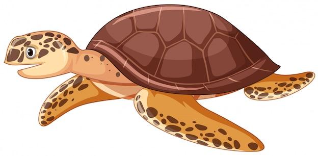 Denny żółw na białym tle