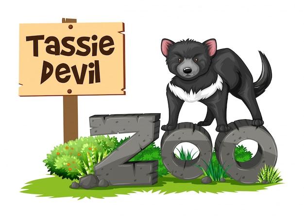 Diabeł tasmański w zoo
