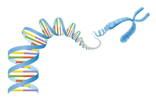Dna helix and gene diagram