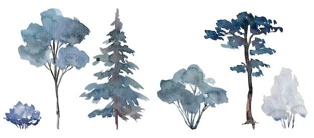 Dobór zimowych drzew i krzewów