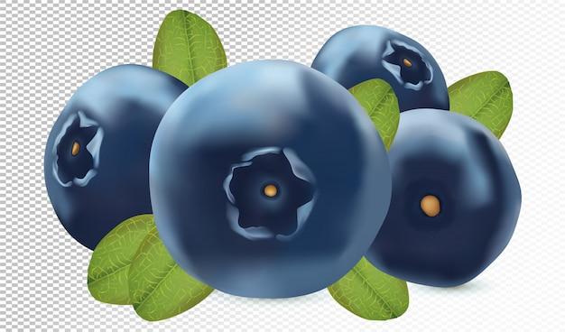 Dojrzałe jagody z zielonym liściem odizolowywającym