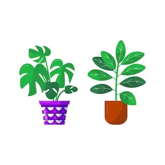 Dom i ogród. kolekcja kolorowych kwiatów botanicznych, jasnych doniczek. zestaw roślin domowych z liśćmi, ziele figowca gumy. pojedyncze elementy na białym tle. ilustracja wektorowa płaskie