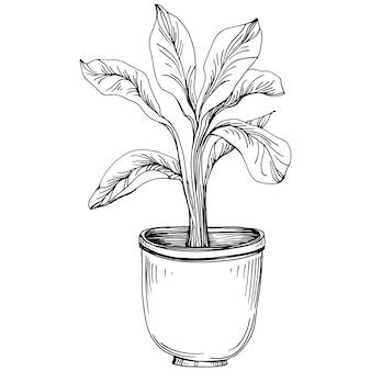Dom roślin w doniczkach szkicu. zarys rysunku na białym tle ilustracja uprawy kwiatów w wiszących roślin do dekoracji wnętrz domu lub biura. kwiatów ogrodowych.