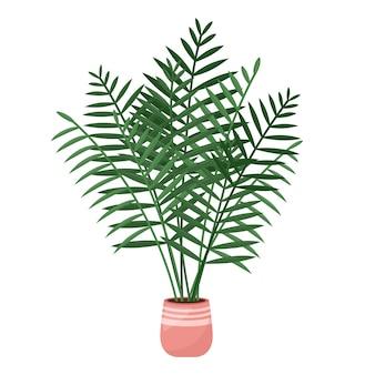 Domowa roślina palma areca, tropikalna roślina doniczkowa, ilustracji wektorowych